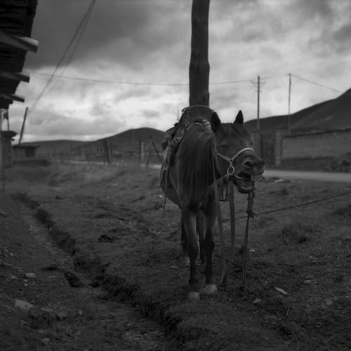 tibet2009_01