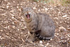 Miao!!! (joeanty) Tags: animals cat nikon gatto joeanty mcb1419 gianlucaantonelli