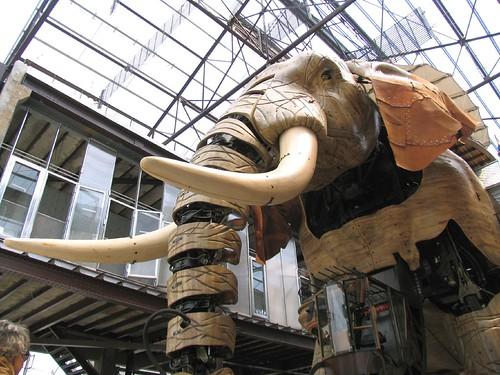 grand éléphant estuaire 2007
