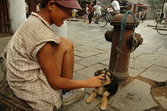 Xi'an Girl (Rafal Bergman) Tags: china street dog pet girl smile play muslim xian quarter
