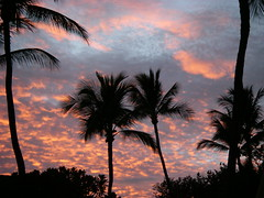 Two Palm Trees Enjoying Lanai Sunset