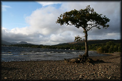 Solitary Tree (pugwash00) Tags: sky mountains tree beach water landscape scotland lochlomond greatphotographers unforgettablepictures excapture