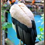 Vulture Virtue thumbnail