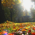 A crispy fall morning at the chicken coop thumbnail