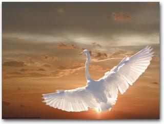 Egret against the sunset