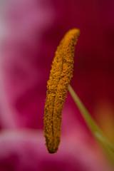 Pollen Sticks