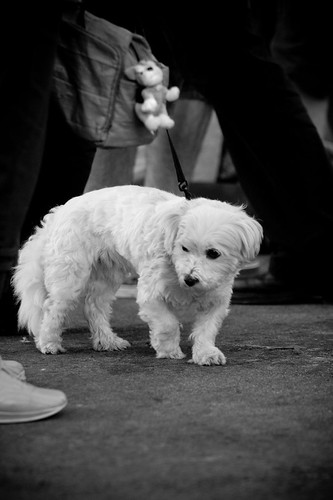 Hond�