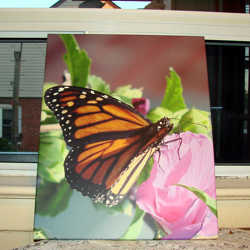 Canvas on demand - Monarch butterfly