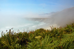 Fog All Around (KellyBear1) Tags: california fog bigsur nikond50 coastal coastline ferns flickrchallengegroup