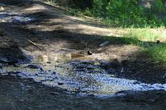 Sonnenschein nach einem Regenschauer (happy rollmops) Tags: wasser landschaft wald bayerischerwald pftze waldboden lambach
