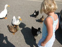 Isabelle and duck parade