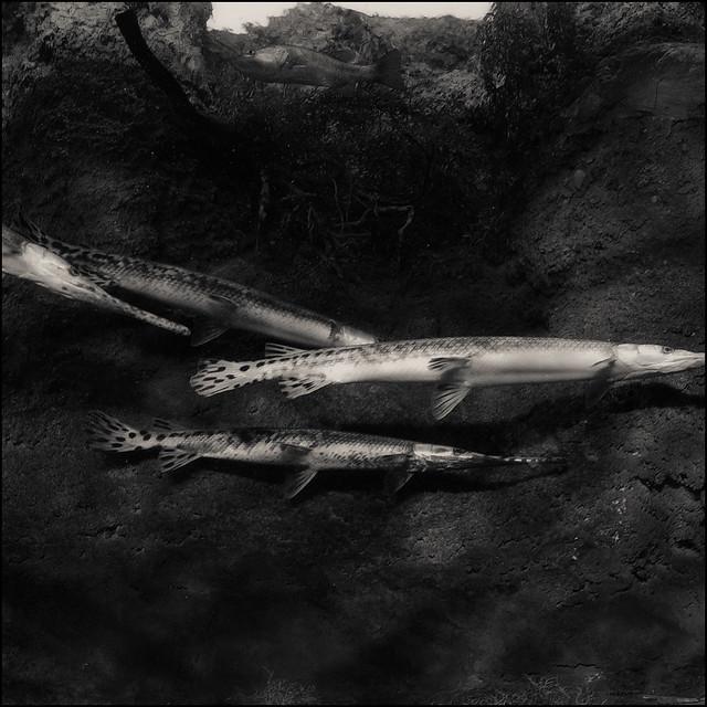 2006 Georgia Aquarium