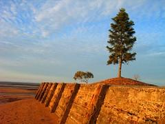 Wellington Point, Australia (henriette_von_ratzeberg) Tags: light sunset tree beach topv111 clouds alone australia lonetree lonelytree warmlight wellingtonpoint favoritesonly onlyyourbestshots weelingtopoint