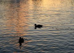 Evening stroll (Mandana (on and off)) Tags: sunset reflection water searchthebest soe shimmer mywinners shieldofexcellence aplusphoto