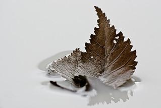 Skimming Leaves
