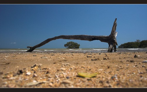 Life and Death at Hervey Bay