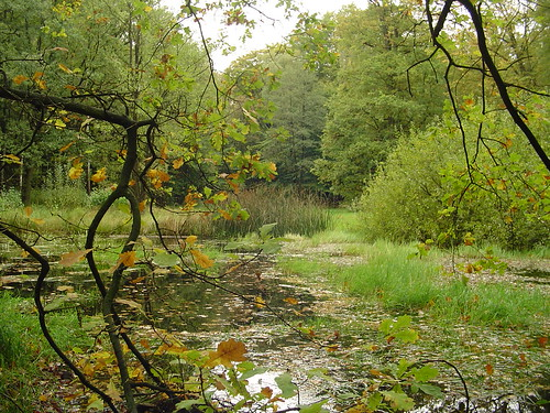 pond in autumn-forest