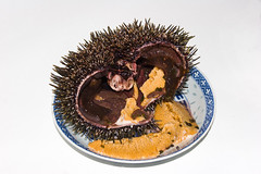 IMG_2816 (Diarmuid : Fisherman) Tags: newzealand food fish fishing seafood urchin kina seaurchin seaegg commercialfishing culinarydelight