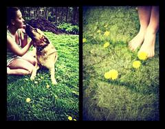 23/365 Saturday Morning (Laine Apine) Tags: morning dog sun selfportrait green texture feet me grass yellow collage myself warm saturday dandelion heat shorts 365 365days