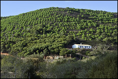 Little House on the Hill (FloydSlip) Tags: blue trees sky brown white house green portugal grass hill slope amoreira