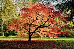 Westonbirt Glory.. (Nala Rewop) Tags: autumn light red tree green raw arboretum westonbirt iphotooriginal
