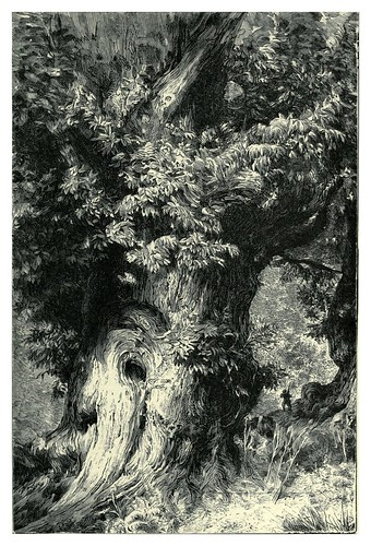 004-Un castaño gigante-The forgotten isles…1896-Frederic Breton