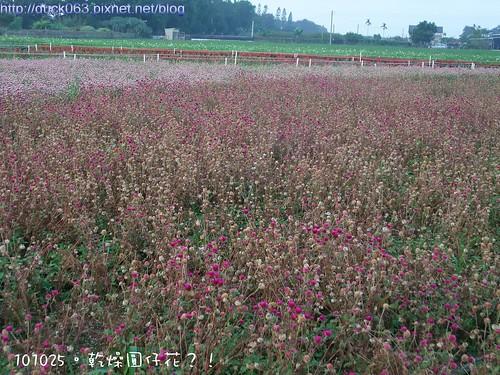 DSCF1987花