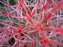 Flower Web (hales.) Tags: excellence blueribbonwinner specnature