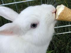 Viva el verano!!! (Ty Zeta) Tags: rabbit oneofakind conejo lapin kaninchen