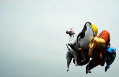 866 (sul gm) Tags: caballo grey gris d feria globos len pingino delfn instantfave salgm ltytr1 wowiekazowie eyegrabber tefaltaeldelfn grisceo