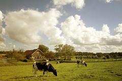Dutch Landscape (siebe ) Tags: holland dutch landscape cow scenery nederland thenetherlands landschap hollandsiebe hollandstock