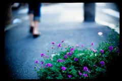 summer has gone (moaan) Tags: life flower zeiss corner 50mm dof bokeh f10 step farewell end flowering noctilux zeissikon goodbye dailylife footstep waved 2007 sentimental rvp endofsummer fujivelvia ordinarylife explored fujirvp inlife justaroundthecorner leicanoctilux50mmf10 bokehwhores withsilentsteps softfootsteps gettyimagesjapanq1 gettyimagesjapanq2
