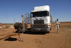 TRUCKING IN BOTSWANA (Claude  BARUTEL) Tags: africa truck transport ostrich botswana trucking