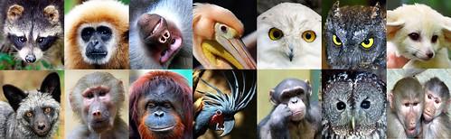 Animal eyes by floridapfe.
