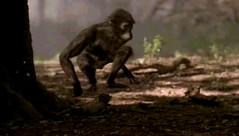 005 03 australopithecus