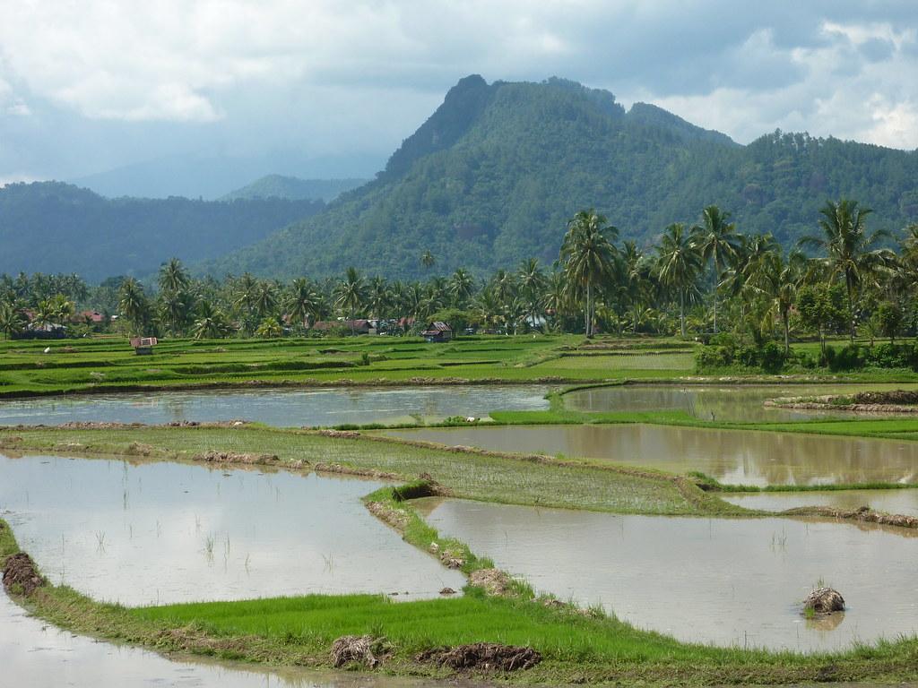 Sumatra-Bukittinggi (209)