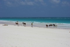 horses on the beach (photos_mweber) Tags: bahamas eleuthera harbourisland pinkbeach horseridingbeach