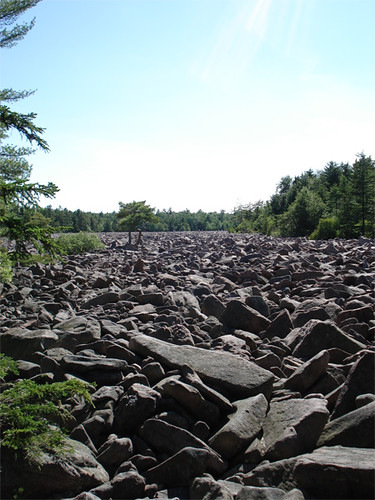 boulder field with tree