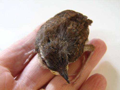 Update On Baby Bird