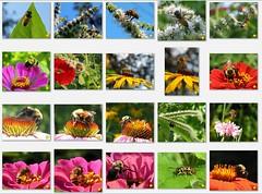 hidden box of bees
