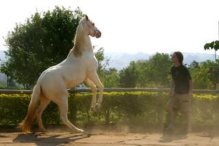 Horse - Pega-Pega...  =^^=