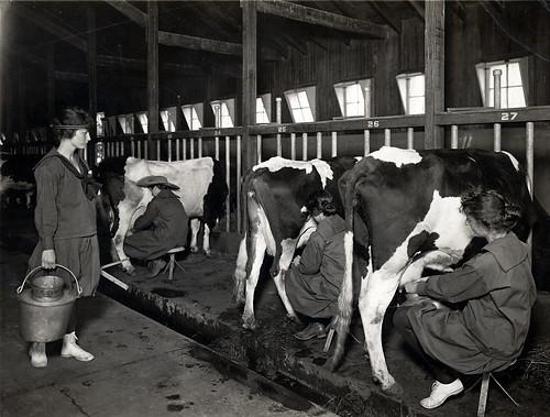Farmerettes milking