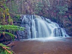 Lilydale Falls - Upper 31 (zeusch) Tags: landscape waterfall australia tasmania