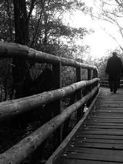 Holzweg durch den Sumpf (laborpadde) Tags: bw mritz