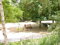 DSC09754 (Cor Draijer) Tags: ouwehandsdierenpark schoolreisje groep34en5