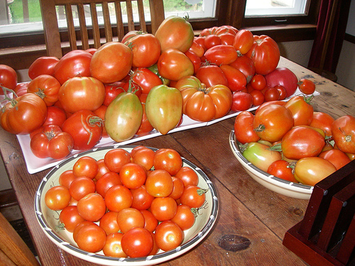 'Maters, 'Maters Everywhere.....