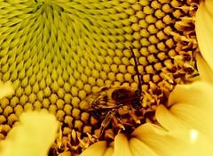 Pollen Heaven
