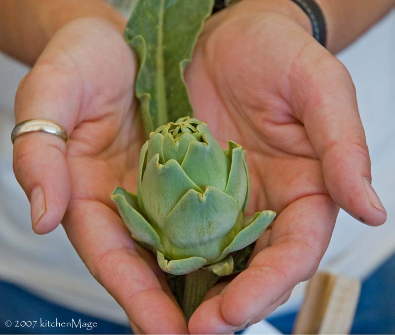 artichoke in farmer's hands