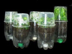 Repurposed (Recycled) Pop Bottle Propagators