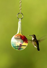 Glass Hummingbird Feeder (tanager55) Tags: red fab black green bird art glass colors yellow tongue silver studio gold rainbow hummingbird bokeh feathers feeder ring ruby throat humming photooftheday 4ofakind 17sept07